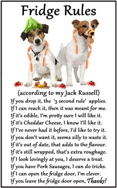 "Jack Russell Terrier - Humorous Magnetic Dog Fridge Rules. Size 6"" x 4"". Available from www.car-pets.co.uk and www.Amazon.co.uk"