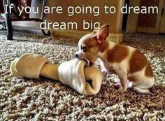 Big bone + little dog = :-)!!