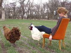 Chicken Footstools From The City Girl Farm ~ Designcombo