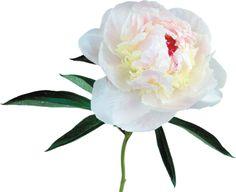 Gify,animacja,obrazki PNG: Kwiaty do dekoracji