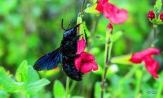 Insect - Fiori e insetti