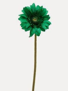 """Flowering Pumpkin  FSD801 21"""" Gerbera Daisy Spray"""