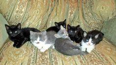 Jan 2014 batch 3 girls, 3 boys