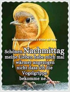 Spirituality, German, Animals, Good Afternoon, Good Night, Good Morning, Funny Sayings, Funny Pics, S Pic