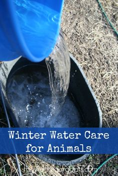 How to deal with all that frozen water for your animals in the winter.