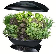 indoor herb gardens:  How to Grow Lettuce, Spinach, and Delicious Leafy Greens In or Outside Your Home