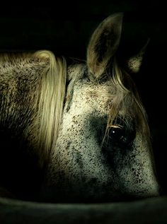 Amazing Photographs of Horses   20+ pictures   See More Pictures   #SeeMorePictures