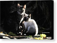 Back Yard Wild Cats Canvas Print by Tom Janca.  All canvas prints are professionally printed, assembled, and shipped within 3 - 4 business days and delivered ready-to-hang on your wall. Choose from multiple print sizes, border colors, and canvas materials.