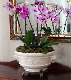 New House: Caring for Orchids