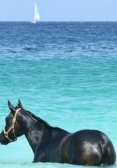 "Horse ~ ""Enjoying The Ocean..."""