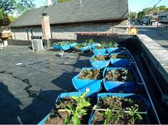 Renaissance of the Victory Garden (Part 2): Up On The Roof | Home | Life | Epoch Times
