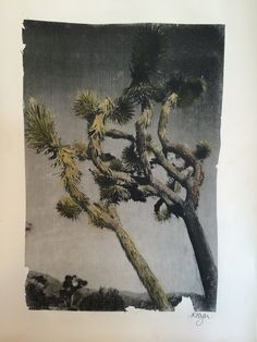 Joshua Trees. Image Transfer, pastel and black pen. Robyn Manning