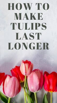 How To Grow Tulips How To Make Tulips Last In 2020 Growing Tulips Tulip Care Tulips