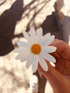 Every little thing has its own significance Flower Aesthetic, Aesthetic Photo, Aesthetic Pictures, Story Instagram, Creative Instagram Stories, Iphone Wallpaper Vsco, Wallpaper Backgrounds, Flower Wallpaper, Nature Wallpaper