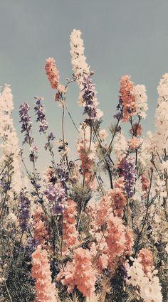 Iphone Background Wallpaper, Flower Wallpaper, Nature Wallpaper, Phone Backgrounds, Spring Wallpaper, Wallpaper Plants, Fashion Wallpaper, Spring Backgrounds, Vintage Flower Backgrounds