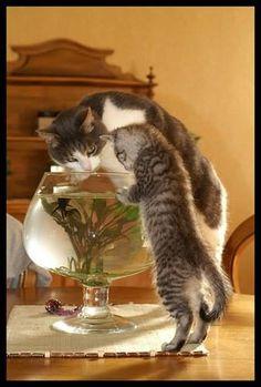 """So hello to our friend fish, dear"""