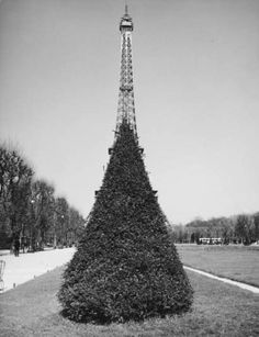Robert Doisneau // Optical illusion of topiary with the Eiffel Tower, 1961. ( http://www.gettyimages.co.uk/detail/news-photo/optical-illusion-of-topiary-with-the-eiffel-tower-1961-in-news-photo/150574549