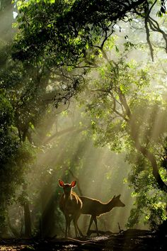 Messengers of the Gods – Deer of Nara, Nara Park