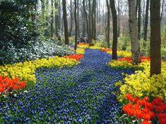 Những cánh đồng hoa đẹp ngất ngây khắp thế giới