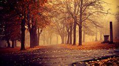 Park in Autumn wallpaper[1920x1080] via Classy Bro
