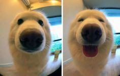 Dog before and after being called a good boy