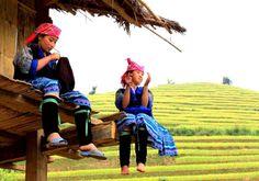 Voyage Destinations Vietnam Voyage à Mu Cang Chai Mu Cang Chai est un des sites célèbres du Vietnam, classé aux patrimoines nationaux. Il est connu de rizières en terrasse jaunes qui passionnent les visiteurs. Outre les paysages pittoresques, Mu Cang Chai charme les touristes par les merveilleuses spécialités.