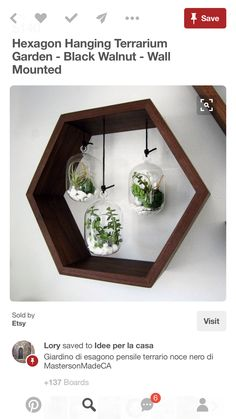 Hexagon Hanging Terrarium Garden - Black Walnut - Wall Mounted - Home Decor Designs Succulents In Glass, Succulents Garden, Glass Cactus, Indoor Succulents, Hanging Succulents, Peonies Garden, Terrarium Diy, Glass Terrarium, Plant Wall