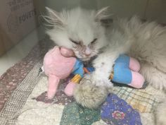 They said this kitty would not be able to survive, but a woman saw the fight in him, rescued him from certain death and gave him a second chance he so deserves.Meet Jon Snow the miracle kitty!Photo: Jon Snow KittyIn late June, a starving stray cat was found in an alleyway and taken into a kill shelt...