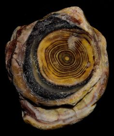Fairburn Agate.  Looks like a wooden dart board.  I think it's cool.
