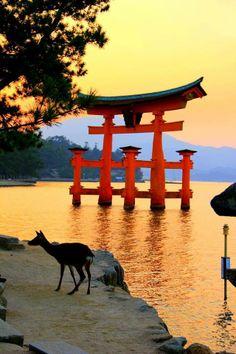 厳島神社/Itsukushima shrine