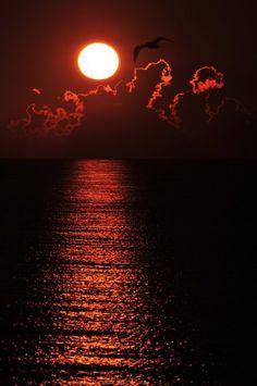 #Moon #Magical #FullMoon #Red #bird #Eerie #Dramatic #AJB