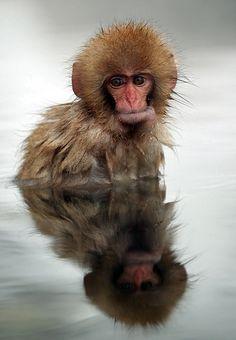 Little snow monkey