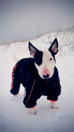 Now that's what I'm talking about!  Indy hated the noise she made when she walked in her snowsuit.  But it kept her warm!