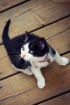 Am I Cute? by pasofino6.deviantart.com on @deviantART
