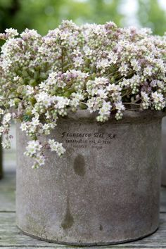 Jeanne d'Arc Living - French style with Nordic palette : reminds me of the Fluer de Petites you see in fancy-shmancy places. White Flowers, Beautiful Flowers, My Secret Garden, Garden Styles, Dream Garden, Garden Inspiration, Container Gardening, Garden Landscaping, Flower Pots