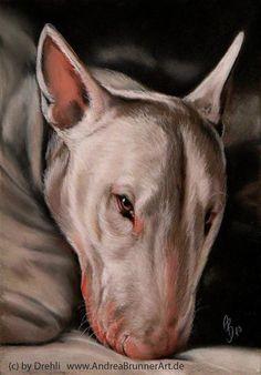 bull terrier by ~Drehli on deviantART