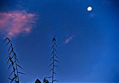 যদি মন কাঁদে তুমি চলে এসো থই থই পৃর্নিমা বসন্তে - কোন এক চাঁদ ডাকা প্রাতে , তো্মার হাতে হাত রেখে হারিয়ে যাবো অনন্ত পাহাড়ি পথ ধরে - রুপসী বাংলায়............। * কক্সবাজারের কোন এক পাহাড়ি পথে ...... অক্টোবর ২০০২ love is a moody dawn after spring moonlight ni