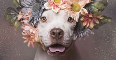 #PitBullFlowerPower Photographer takes beautiful photos of Pet Bulls to help them find forever homes.