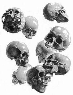 Stephen Rogers Peck ~ Atlas of Human Anatomy for the Artist [skulls]