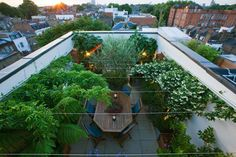Olive Bay roof garden