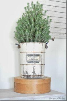 Display a mini tree in an ice cream freezer
