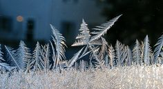 Ice Crystal Forest