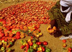 Peppers and tomatoes drying in the sun