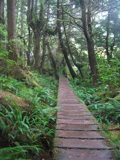 West Coast Trail - Boardwalk & Branches.. Would love to do this.. sure I would need a lot of training and it is a 7 day hike but would love the challenge