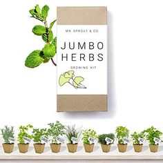 He Can Grow His Own Herbs: Mr. Sprout & Co Large Herb Kit: 10 Seed Varieties – Medicinal and Culinary Herb Garden Kit Herb Seeds, Garden Seeds, Flowers Perennials, Planting Flowers, Flower Plants, Kids Gardening Set, Seed Starter Kit, 5 Sense Gift, Kitchen Herbs