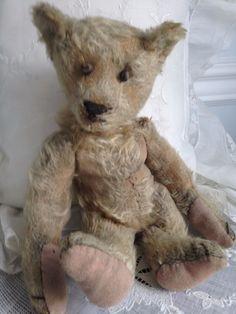Bear Antique Circa 1907 1908 | eBay