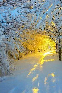 Amanhecer na neve (Foto: Roberto Melotti) ❄ Sunrise in the snowy woods (Photo: Roberto Melotti) All Nature, Amazing Nature, Nature Tree, Amazing Grace, Foto Picture, Snowy Woods, Snowy Forest, Forest Trail, Forest Path