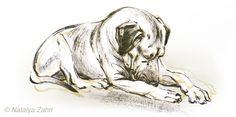Rhodesian Ridgeback dog Oscar on a Cape Cod beach