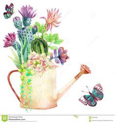 Watercolor Succulents Watering Can Butterflies Hand Stock Illustration 307440758 Watercolor Succulents, Watercolor Flowers, Watercolor Paintings, Illustration, Cactus Y Suculentas, Cactus Flower, Free Vector Art, Vintage Flowers, Art Drawings