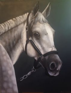 Tierportrait Pferd